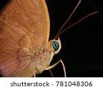 Moth Photography Macro Closeup...