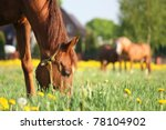 Brown Horse Eating Grass On The ...