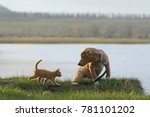 Stock photo puppy and kitten are sitting by the lake 781101202