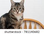 tabby cat looking at camera | Shutterstock . vector #781140682