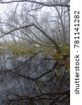 Small photo of Alder tree silhouettes reflecting in water