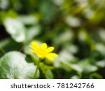 beautiful yellow flower closeup | Shutterstock . vector #781242766