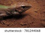 whiptail cerrado lizard | Shutterstock . vector #781244068