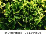 beautiful plant closeup shot | Shutterstock . vector #781244506
