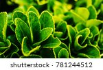 beautiful plant closeup shot | Shutterstock . vector #781244512