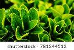 beautiful plant closeup shot | Shutterstock . vector #781244512