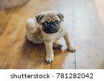 Stock photo pug puppy scratching 781282042