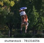 a dog playing fetch in a local... | Shutterstock . vector #781316056