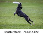 a dog playing fetch in a local... | Shutterstock . vector #781316122