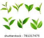 green tea leaf collection set.... | Shutterstock .eps vector #781317475