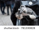 portrait of dog into the... | Shutterstock . vector #781330828
