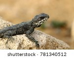lizard sits on a rock and basks ... | Shutterstock . vector #781340512