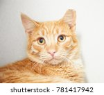Orange Tabby Cat Looking At...