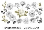 a collection of roses... | Shutterstock .eps vector #781432645