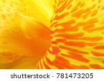 Closeup Of Yellow Canna Lilly...