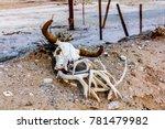Animal Skull In The Sand.