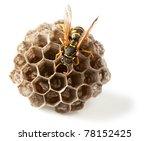 Macro Of Wasp  Vespula Vulgari...