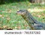 closeup giant lizard head | Shutterstock . vector #781537282