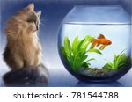 Cat Looking At Goldfish In...