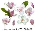 magnolia isolated spring flower ... | Shutterstock .eps vector #781581622