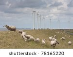 Grazing Sheep With Some Big...