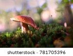 in a wide brimmed hat.handsome... | Shutterstock . vector #781705396