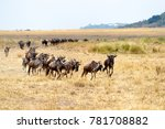 herd of blue wildebeest running ... | Shutterstock . vector #781708882