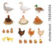 chicken brood hen  ducks and... | Shutterstock . vector #781814026