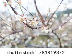 close up of the blooming branch ...   Shutterstock . vector #781819372