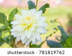 beautiful white flower in the...   Shutterstock . vector #781819762