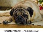 sluggish  lazy  dull dog at... | Shutterstock . vector #781833862