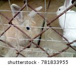lovely rabbit in the cage | Shutterstock . vector #781833955