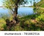 picturesque summer lake calm... | Shutterstock . vector #781882516
