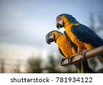 Two Blue And Gold Macaw On Blu...