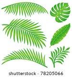 summer leaf   Shutterstock .eps vector #78205066
