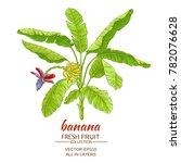 banana  tree vector... | Shutterstock .eps vector #782076628