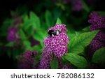 bumblebee pollinates flowers | Shutterstock . vector #782086132