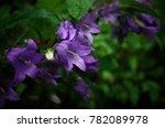 flowers of purple bell  flower... | Shutterstock . vector #782089978