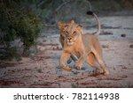 a horizontal  full length ... | Shutterstock . vector #782114938