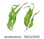 Seaweed Kelp  Watercolor...