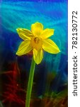 yellow narcissus flower in the...   Shutterstock . vector #782130772