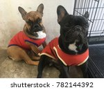 french bulldog wearing the... | Shutterstock . vector #782144392
