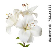 a bouquet of light lilies...