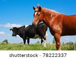 Horse And Cow Pasture