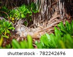 palm leaves. tropical forest on ... | Shutterstock . vector #782242696