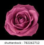 pink rose on the black ... | Shutterstock . vector #782262712