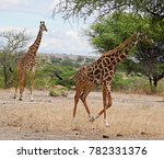 family of giraffes close up  | Shutterstock . vector #782331376