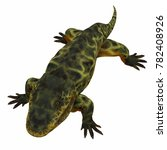 eryops dinosaur on white 3d... | Shutterstock . vector #782408926