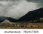 Herd Of American Bison Buffalo...
