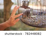 Small photo of a little parrot enjoy in fondling by the human's finger